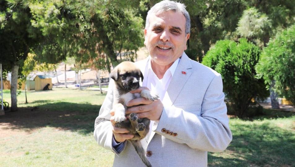 Beyazgül, Sokak hayvanları için desteğe hazırız Urfa Haber
