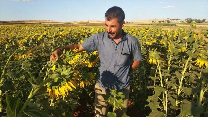 Suruçlu çiftçiler tarımda sınır tanımıyor Urfa Haber