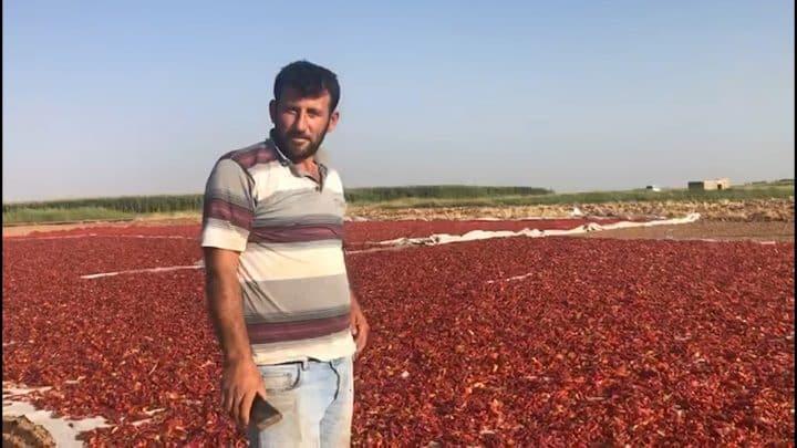Urfa biberi çiftçiyi üzdüurfa manşet haberler