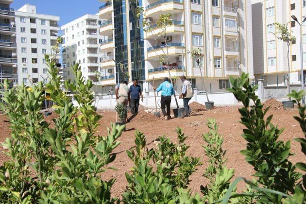 Haliliye Belediyesi parkları ağaçlandırıyor  Urfa Gündemi