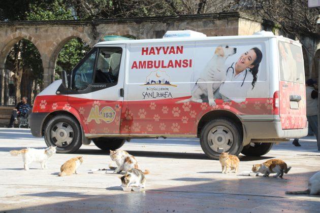 Sokak hayvanları unutulmadıurfa manşet haberler